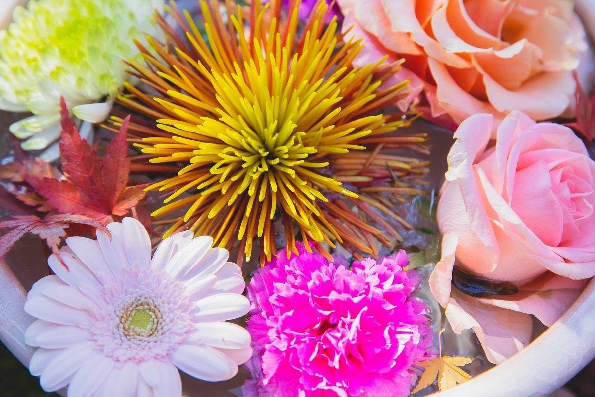 ciotola con all'interno acqua e fiori