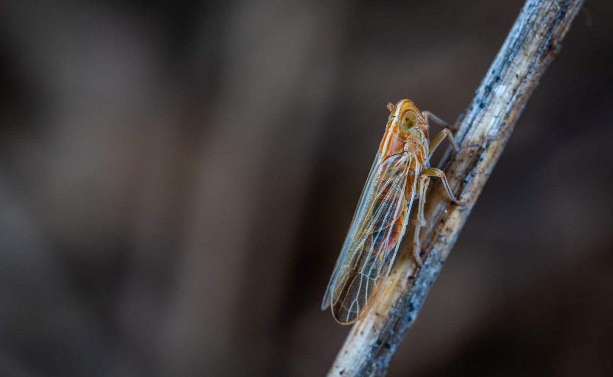 cicala appoggiata ad un ramoscello