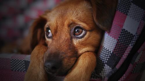 Cosa pu insegnare un cane mille lezioni di vita - Cane pipi letto ...