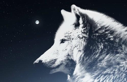 lupo bianco leggenda cherokee