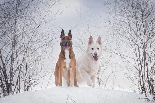 Storia dei Due Cani