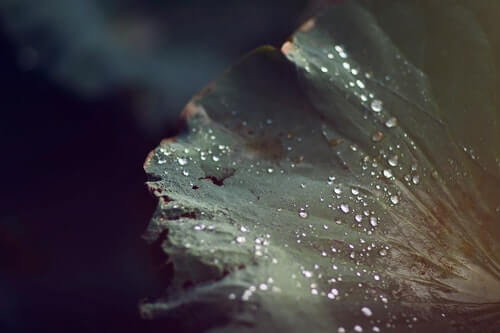 fiori idrofobi
