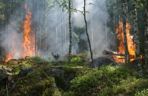 alberi bruciati
