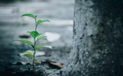 albero e nuova vita