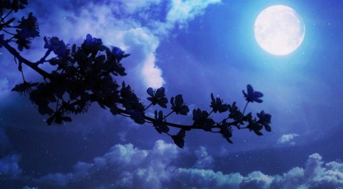 luna dei fiori