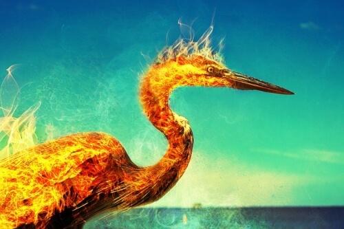 fenice-phoenix-fiamme-airone-