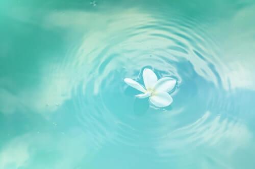 acqua-fiore-bianco-purezza