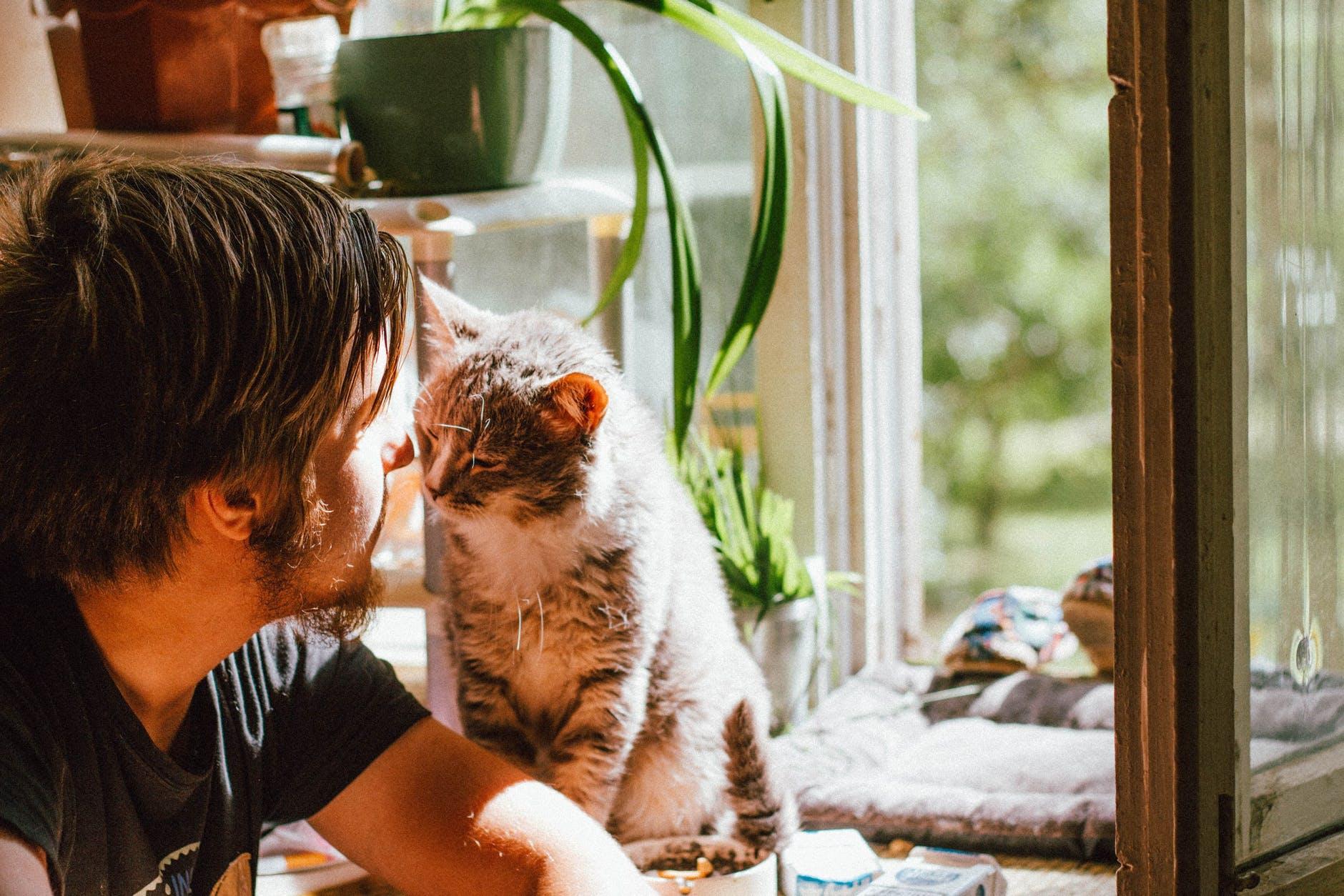Ragazzo insieme ad un gatto vicino alla finestra
