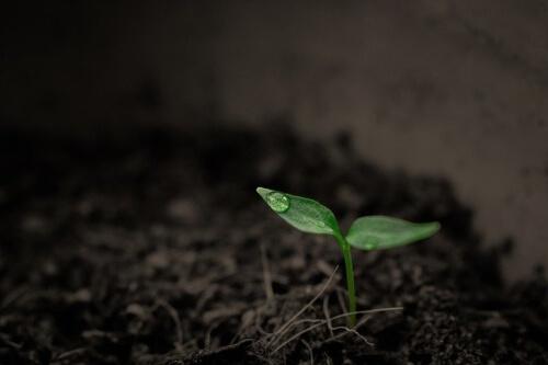 germoglio-pianta-verde-crescere-cresci-impianto-