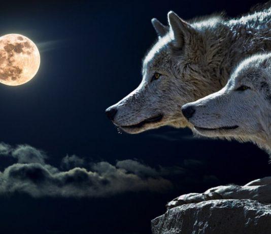 lupi e luna
