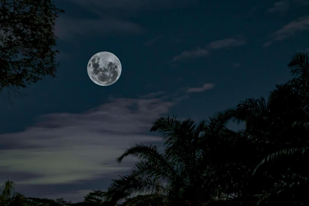 plenilunio-luna-piena-con-alberi